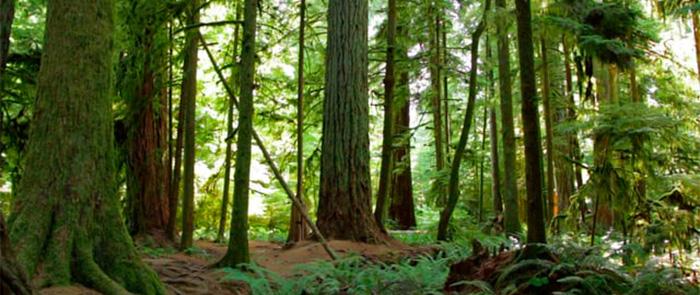 Forest Stewardship Council